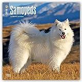 Samoyeds - Samojeden 2018 - 18-Monatskalender mit freier DogDays-App: Original BrownTrout-Kalender [Mehrsprachig] [Kalender] (Wall-Kalender)
