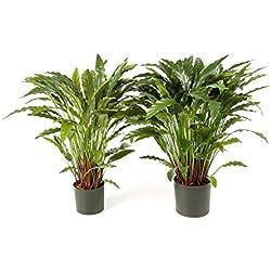 artplants Kunstpflanze Calathea BAHATI mit 125 Blättern, grün, 85 cm - Künstliche Calathea/Deko Pflanzen