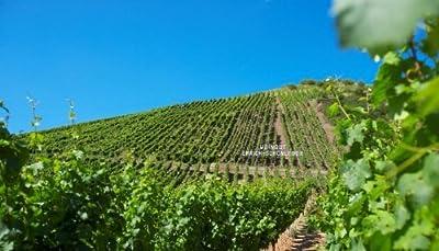 Maltaflor Bio - Spezialkulturen in der Landwirtschaft, Obst-, Wein- und Gemüseanbau von MALTaflor GmbH bei Du und dein Garten