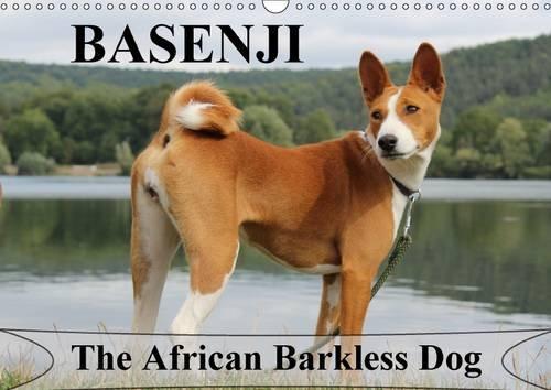 basenji-the-african-barkless-dog-wall-calendar-2017-din-a3-landscape-the-basenji-is-a-dog-breed-comi