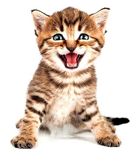 EROSPA® 3D Katze/Cat Wand-Aufkleber Fenster Wandtattoo - Sticker - Wohndeko - 20 x 30 cm