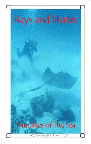 Epub Gratis Rays and Skates: Pancakes of the Sea (15-Minute Books Book 315)