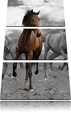 Mustangherde in sand black / white 3-piece canvas picture 120x80