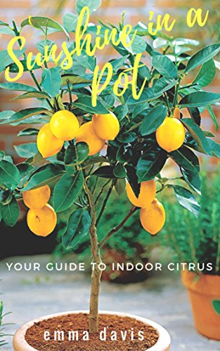 sunshine-in-a-pot-your-guide-to-indoor-citrus-grow-lemon-tree-indoors