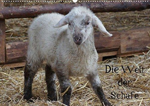Die Welt der Schafe (Posterbuch DIN A4 quer): Wollige Nutztiere (Posterbuch, 14 Seiten) (CALVENDO Tiere) [Papeterie] [Dec 21, 2012] kattobello, k.A. -