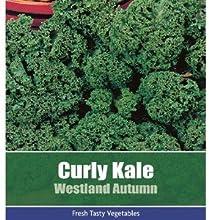 Gratis Rizado Kale Westland Otoño Vegetal Planta 150 Semillas
