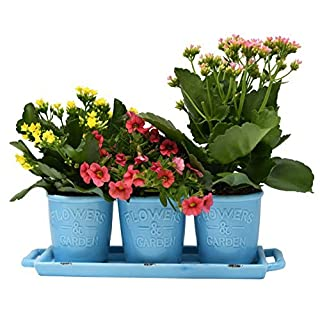 ARAD Country Rustic Aqua Ceramic Succulent Planters - Flower Pots & Handled Display Tray, Office Desktop Potted Stand, Home & Office Decor Accent, Set of 3 + Tray - 4 x 4 (each planter)
