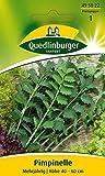 Kräutersamen - Pimpinelle von Quedlinburger Saatgut