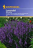 Lavendel, 'mehrjährig'
