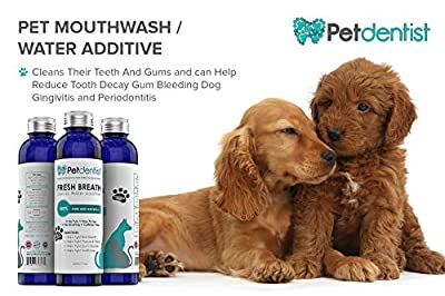 Petdentist Dog Dental Care Fresh Breath Water Additive Plaque Tartar Remover for Dogs Easy Teeth Cleaning Oral Hygiene Freshener Product for Gums Gingivitis Periodontitis and Bad Cat Dog Breath-500ml by Petdentist