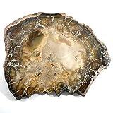 Legno fossile da 3 a 5 CM pietra grezza di litoterapia e collezione