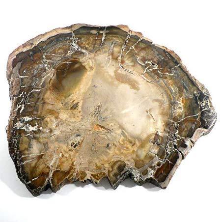 Fossiler Wald(Holz) von 3 BIS 5 CM unbearbeiteter Stein lithothérapie und Sammlung - Sonne Original Speicher