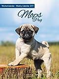 Mops 2017: Foto-Wochenkalender