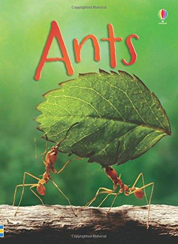 ants-beginners