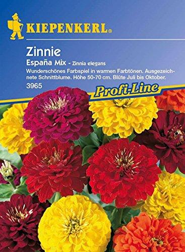 Kiepenkerl, Zinnien, Zinnia elegans Espana Mix -