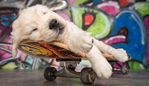 """Vlies Fototapete / Tapete / XXL Poster für Kinderzimmer \""""Skateboard Puppy Hund / Grafitti\"""""""