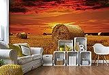 Wallsticker Warehouse Gold Landschaft Feld Natur Fototapete Fotomural - Wandbild - Tapete - 254cm x 184cm / 2 Teilig - Gedrückt auf 115gsm Muralpapier - 415P4 - Wiesen & Landschaft
