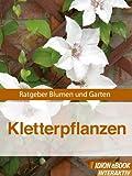 Kletterpflanzen - Ratgeber Blumen und Garten