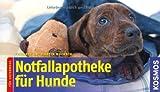 Notfallapotheke für Hunde: für unterwegs