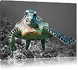 große Schildkröte über Korallenriff schwarz/weiß Format: 60x40 auf Leinwand, XXL riesige Bilder fertig gerahmt mit Keilrahmen, Kunstdruck auf Wandbild mit Rahmen, günstiger als Gemälde oder Ölbild, kein Poster oder Plakat