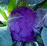 Hirts%3A Seed%3B Vegetable Purple Cauliflower 40 Seeds Low Carb Veggie