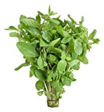 #9: Tree Story Mint Leaves, 100g