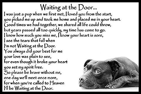 Staffordshire Bull Terrier Staffy bereavement pet dog loss sympathy Memorial