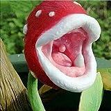 Wekold 100 Teile/Beutel Seltene Insekten Fangen Samen Fleischfressende Bonsai Samen Garten Dekoration