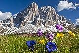 adrium Poster-Bild 90 x 60 cm: Bergblumen in den Dolomiten,