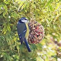 Bird Seed Wreaths Box Of 8 | Unique Hanging Bird Feeders & Bird Lover Gifts - The Bird Bakery