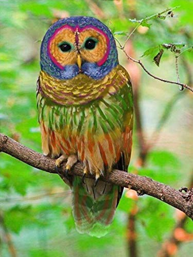 - Erwachsene Parrot Hat