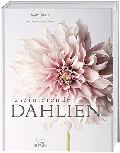 Faszinierende Dahlien
