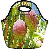 Lunch-Tasche,Grüne Mango-Mango-Niederlassung Der Baum-Reifen Obstpflanze-Wiederverwendbaren Kühltasche Isolierte Thermische Picknick-Handtasche Für Reise, Schule, Draußen, Arbeit