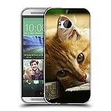 Just Phone Cases Schutz Hülle TPU Case Schutzhülle Silikon Tasche Dünn Transparent // V00004287 Katze liegend auf Holzbrettern // HTC One M8