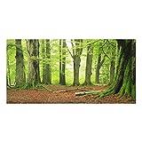 Spritzschutz Glas - Mighty Beech Trees - Quer 1:2, Größe HxB: 40cm x 80cm