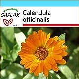 SAFLAX - Set regalo - Botón de oro - 50 semillas - Calendula officinalis