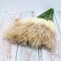 XINGXIAOYU Pampasgrass 20 Single Reeds, Wedding Nordic Green Plants, Fake Reed Grass, Reed Heads, Decorative Grass@Gray