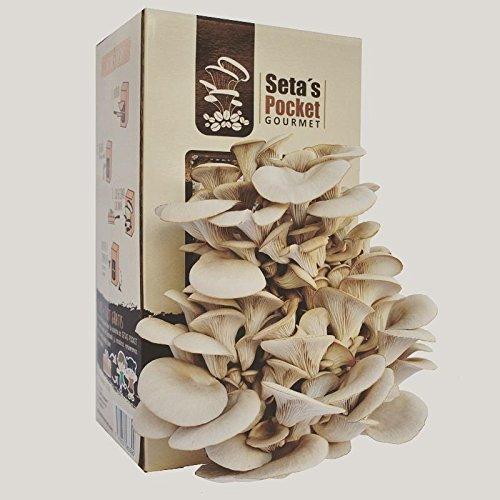 El kit de autocultivo Seta's Pocket te ofrece la posibilidad de cultivar en casa tus propias setas gourmet de una manera sencilla, cómoda y en tan sólo 10 días. Peso: 2.5 Kg El kit incluye: Bolsa con el cultivo de setas del tipo ostra ( Pleurotus ost...