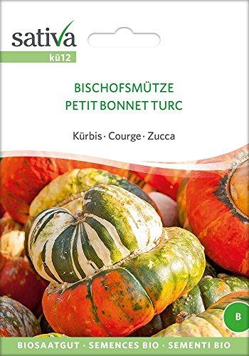 Kürbis Bischofsmütze | Bio-Kürbissamen