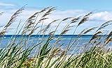 Tapeto Fototapete - Strand See Sand Natur - Vlies 368 x 254 cm (Breite x Höhe) - Wandbild Gras
