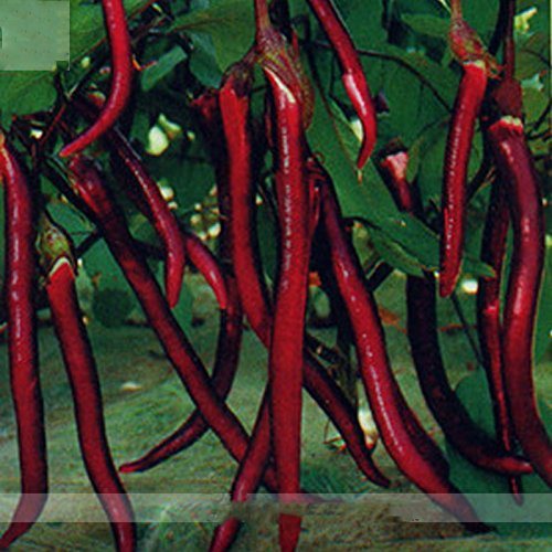(Rouge long * Ambizu *) Hangzhou rouge à long Aubergine F1 Graines de légumes, Al Pack, 200 graines