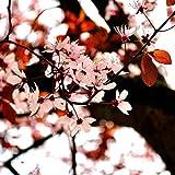 Pixtury Quadro su Tela Canvas su Telaio in Legno 120x120 cm - Cose Che Fanno Primavera