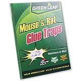 Green Leaf - Trampa de pegamento para ratas y ratones (34 x 22 cm), respeta el medio ambiente, sin peligro para el ser humano.
