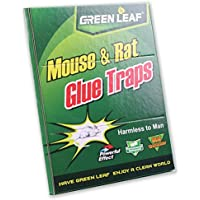 Green Leaf – Trampa de pegamento
