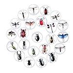 5 Stücke 3D Insekt Kühlschrank Magneten Kunst Zimmer Wand Dekor Handwerk Diy Für Home Office Zufällig