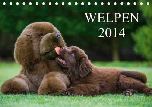 Welpen 2014 (Tischkalender 2014 DIN A5 quer): 13 bezaubernde Welpenfotos begleiten uns durch das Jahr 2014 (Tischkalender, 14 Seiten)