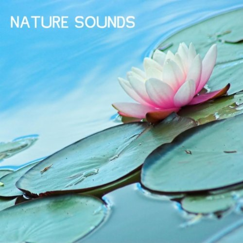 Relaxing Underwater Sounds for...