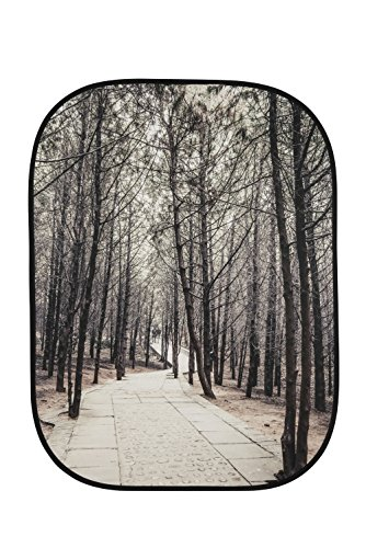 Get Lastolite by Manfrotto 1.5 x 2.1 m Perspective Collapsible Background, Stone Steps/Winter Trees