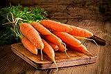 Portal Cool Zanahoria Olympus - Late, Flakkee Variedad - 4250 Semillas