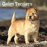 Cairn Terriers - Cairn Terrier 2019 - 18-Monatskalender mit freier DogDays-App (Wall-Kalender)